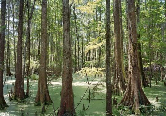 Picturing Bvlbancha: An-My Lê's Photographs of Coastal Louisiana